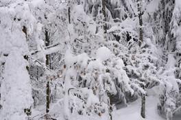 snowforest_Eiskristall_Schnee.jpg