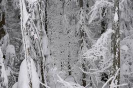 snowforest_black_white_dicht.jpg