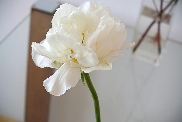Blume-Weiss-frisch-Glas.jpg