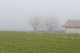Nebel_Baum_fog_Haus_Wiese.jpg