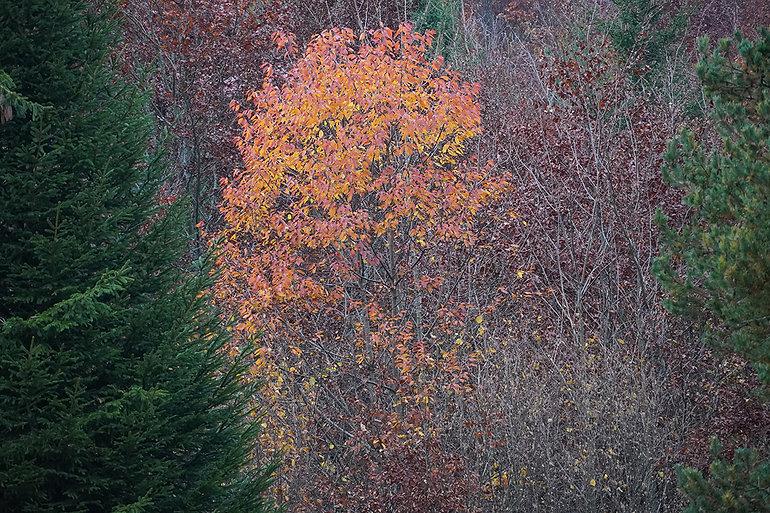 Herbst-Feuer-Orangerot-leuchten-Kunst.jp