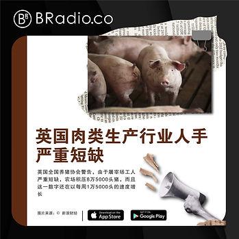 Bradio新闻图_Artboard 3.jpg