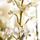 Thumbnail: Dendrobium Orchidee