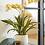 Thumbnail: Orchidee Oncidium