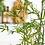 Thumbnail: Bamboe