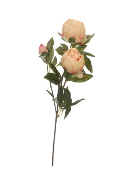 Pioenroos met 3 bloemknoppen