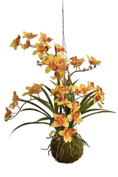 Cymbidium orchidee hangend