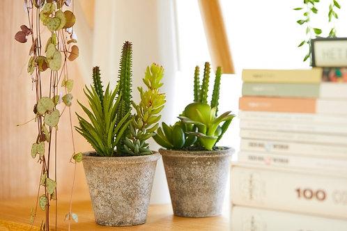 Gemengde succulenten