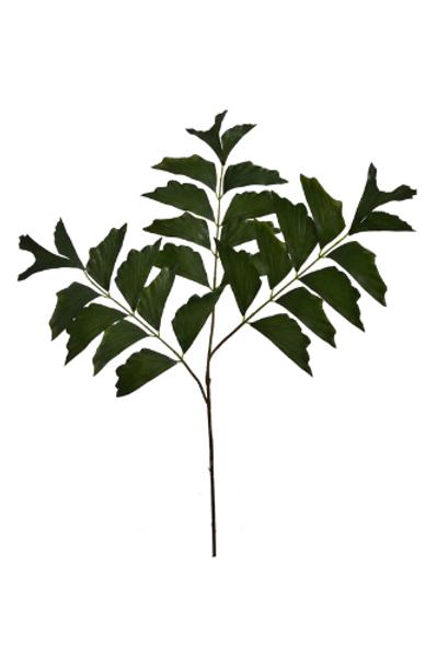 Fishtale palm tak
