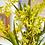 Thumbnail: Oncidium Orchidee