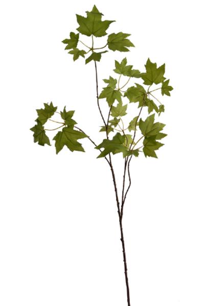 Acer blad tak