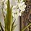 Thumbnail: Vanda Orchidee