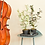 Thumbnail: Eucalupthus plant