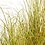Thumbnail: Gras