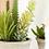 Thumbnail: Gemengde succulenten