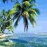 La beauté cachée palmier ile