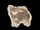 チワワ/Chihuahua