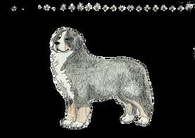 バーニーズ・マウンテン・ドッグ/BERNESE MOUNTAIN DOG