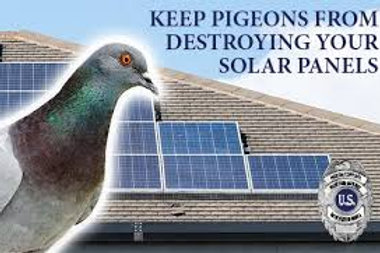 Pigeon Nets/Guards