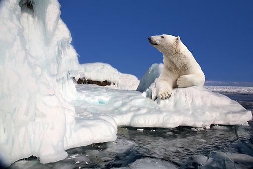 polar bear standing on the ice block.jpg
