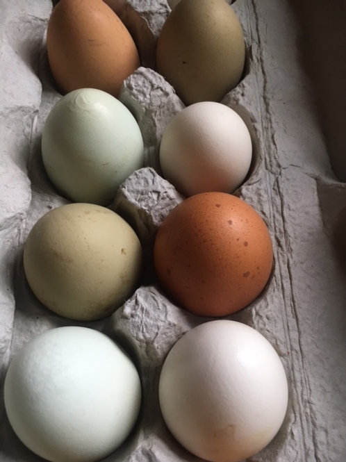 1 Dz. Chicken Eggs