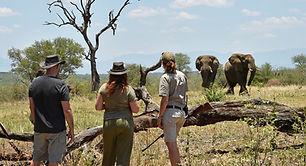 Bushlover-Safari_edited.jpg