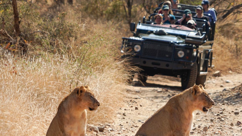 KLassik%20Safari-lions%2Bcar-1-3_edited.