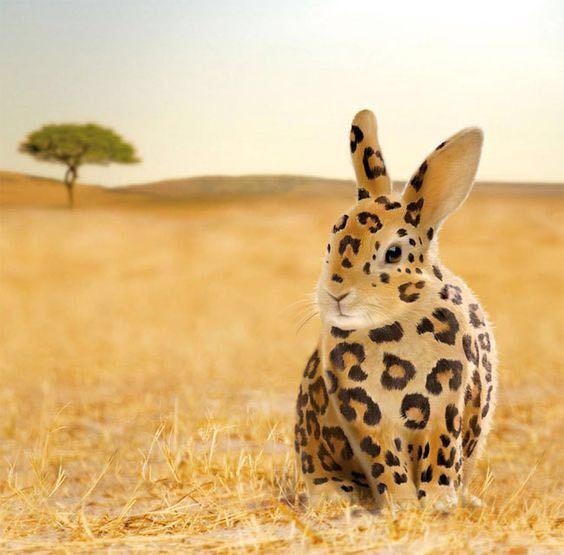 Easter Rabbit-Leopard.JPG