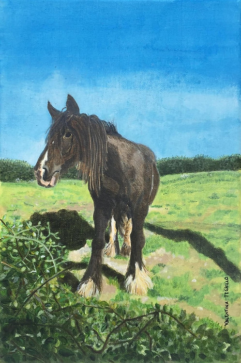 Old brown black horse at the edge of a Devonian field looking at you. Hot sunlight and bushes on the front