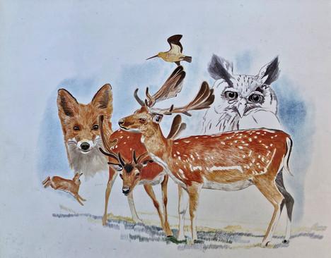 English wildlife