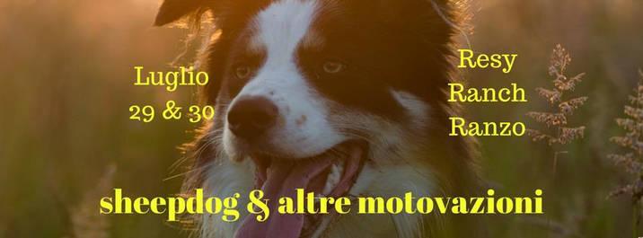 Sheepdog e altre motivazioni