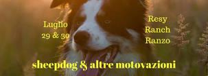 Sheepdog & altre motivazioni.