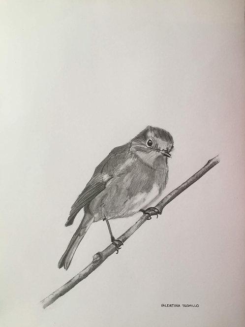 Robin on a twig in pencil