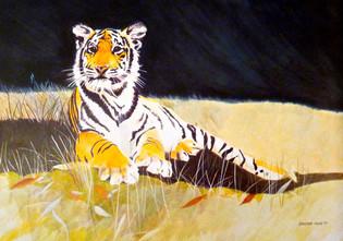 Storm tiger