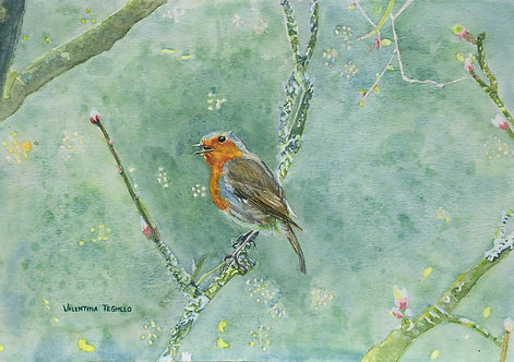 A Robin on a thin tree branch with spring buds