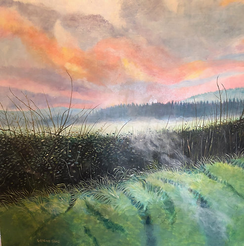 Misty sunset in a Welsh field with a thick green hedge
