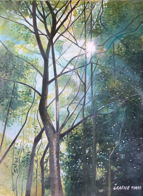 Sunlight coming through tree branches in the wood. Mystical and magical atmosphere