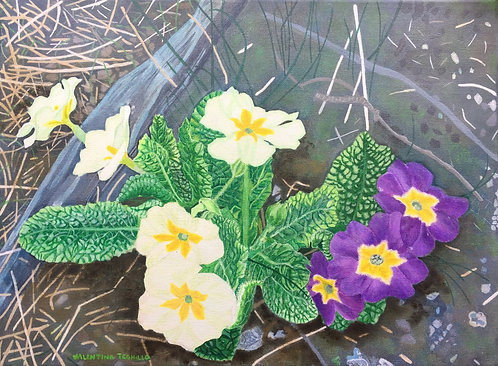 Creamy and violet Primroses on the ground near a fallen tree branch