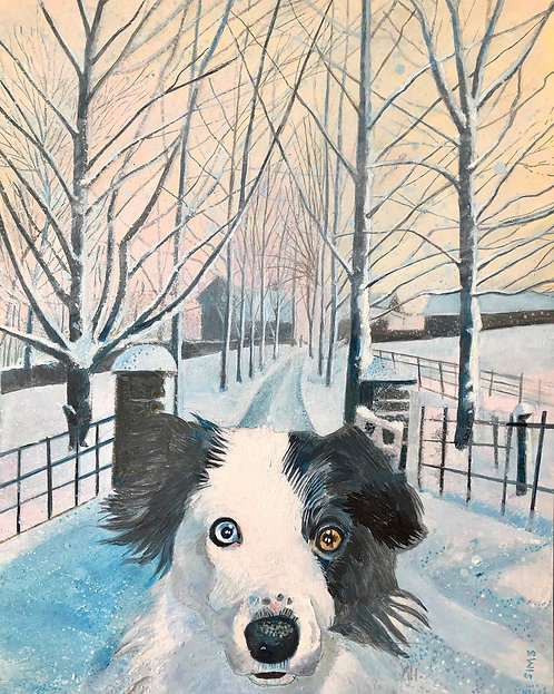 A Border Collie (with a blue eye and a brown one) in front looking at you. Behind her a snowy path leading to a Welsh house