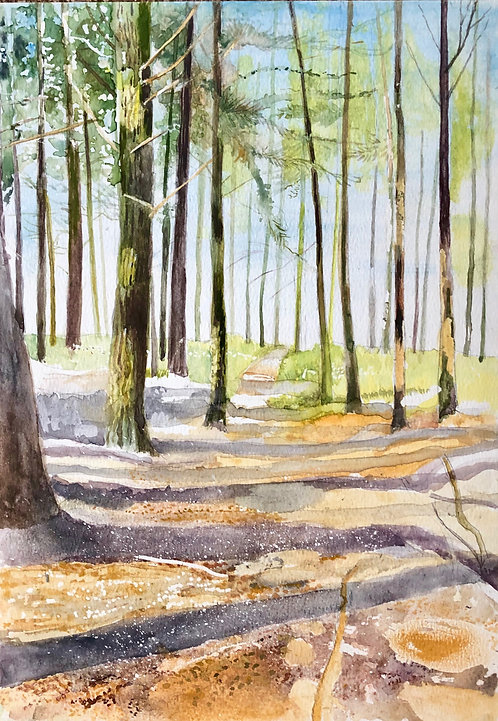 Pine forest with shadowed light