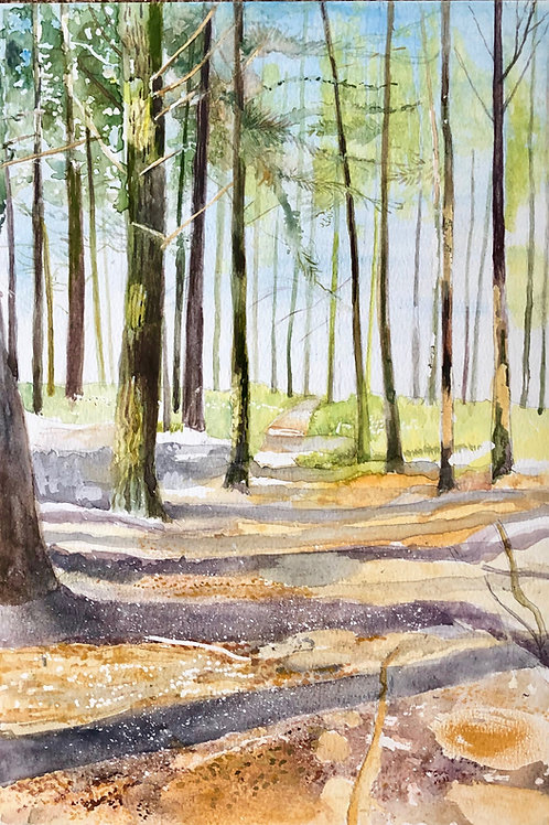 The pine forest, Llanover