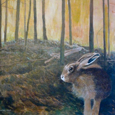 The woodland hare