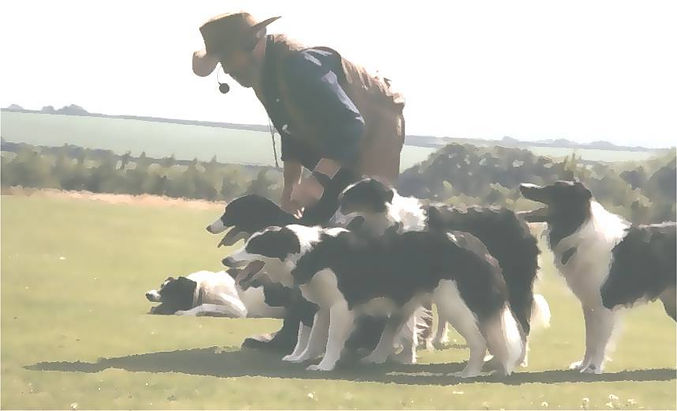 Graeme Sims working with his Border Collie at a demonstration.