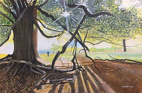 Big tree in front with tortuous branches. The sun lights creates big shadows. A man and a dog behind in the field