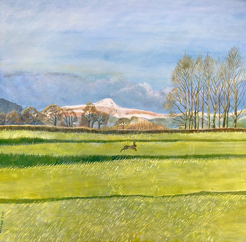 A hare is running in the middle of a sunny field having Sugar Loaf Mountain in background