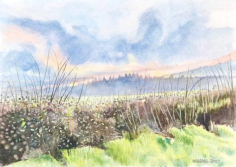 Misty field on a Welsh morning