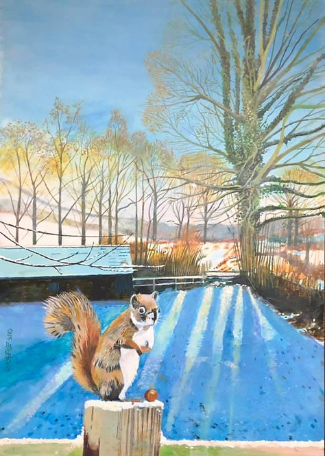 Squirrel in front on a fence eating hazelnuts. Snowy Welsh field with dusk shadows. A barn and a tree in background