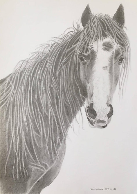 Welsh mountain pony in pencil.