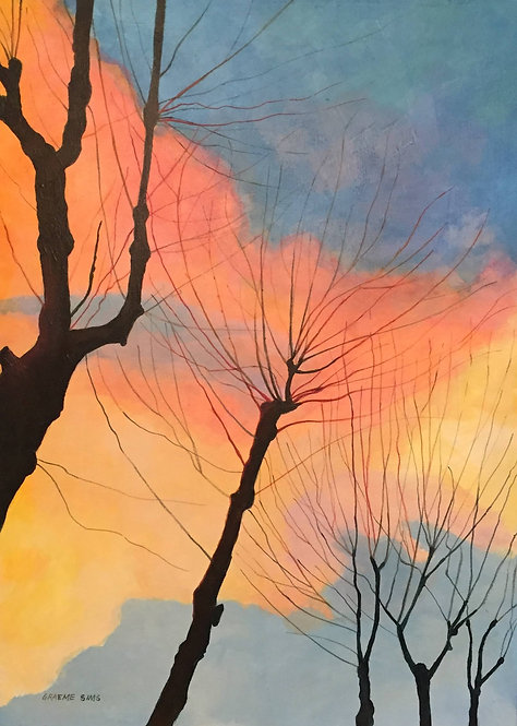 Reddish, bluish and orangish colours in the sky that highlight the shape of pruned trees