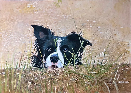 Border Collie appearing with his face from the curved earth ground